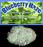 BlueBerry Haze Smoking Alternative for Marijuana Smokers